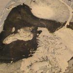 ammonit-in-feuerstein-mönsklint-dk