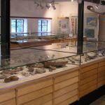 vitrinen-fossilien